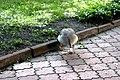 Київський зоопарк Гуска атакує 05.JPG