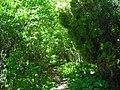 Луцький ботанічний сад «Волинь»2.JPG