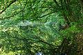 Лісове озеро в Холодному Яру.jpg
