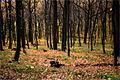 Парасоцький ліс 1.jpg
