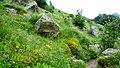 """Стара Планина-околностите на хижа""""Рай"""" - panoramio (9).jpg"""