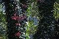 گیاهان در پاییز - باغ بوتانیکال تفلیس 10.jpg