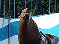 オホーツク水族館 (北海道網走市二ツ岩海岸)15 トド.jpg