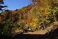 剣山スーパー林道 - Mt.Tsurugi super forest road - panoramio (8).jpg