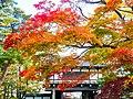 千秋公園の紅葉03.jpg