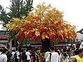 南京夫子庙 - 合欢树 - panoramio.jpg
