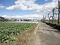 国道155号 - panoramio (8).jpg