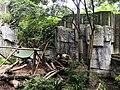 大熊猫照片图像.jpg