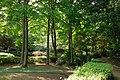 東高根森林公園 - panoramio (20).jpg