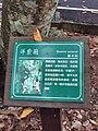 洋紫荊Bauhinia purpurea 20210428210823 03.jpg