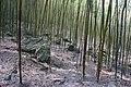 竹林 Bamboo Grove - panoramio.jpg