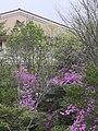 通学路から菩提寺北小学校を見上げる。.jpg