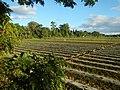 0126jfLandscapes Sunsets Fields Maronquillo San Rafael Bulacanfvf 16.JPG