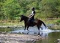 02018 0524 Abschied vom Sommer, Reiten auf den Huzulen Pferden in Rudawka am Wisłok.jpg