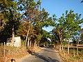 0581jfLandscapes Mabalas Diliman Salapungan Paddy fields San Rafael Bulacan Roadsfvf 02.JPG