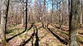 05 Grabhügelgruppe im Waldstück Hainbach.jpg