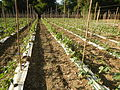 09681jfSan Rafael Bulacan Chapel Diliman Paddy Vegetable Fields Roadsfvf 03.JPG
