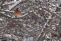 13-02-09 Nemo Snowstorm (Unedited) (91) (8466155521).jpg