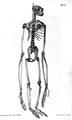 1837 BostonJournal NaturalHistory v1 Plate1 BFNutting Pendleton.png