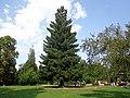 1989 memorial Sequoia sempervirens 04.jpg