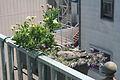 2008 flower box 2892706707 f4ceceb0bd o.jpg