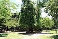 2010 07 21070 6744 Da'an District, Taipei, Daan Park, Taiwan, Plants.JPG