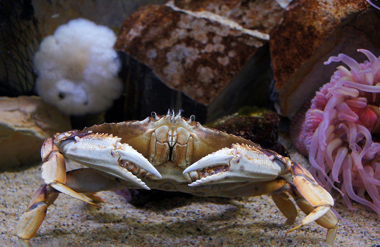 Image Result For San Francisco Aquarium