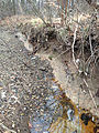 2014-12-20 13 01 06 Eroded bank along the West Branch Shabakunk Creek near Terrace Boulevard in Ewing, New Jersey.JPG
