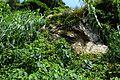 2016-08-05 Kami-shima Island,Kagami-ishi 鏡石 DSCF6552.jpg