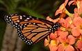 2019-04-15 13-16-48 jardin-papillons-hunawihr.jpg