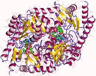 Aminolevulinic acid synthase - Aminolevulinic acid synthase dimer, Rhodobacter capsulatus