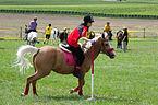 4ème manche du championnat suisse de Pony games 2013 - 25082013 - Laconnex 49.jpg