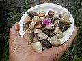 4022Common houseflies cats ants plants foods of Bulacan 56.jpg