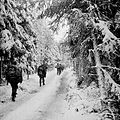 517th PRCT in the Hurtgen Forest.jpg