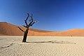 550 let staré stromy v Deadvlei - panoramio (1).jpg