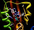 ATP binding domain.png