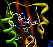 ATP binding domain.png