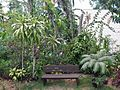 A Bench in the Tropics (23774350951).jpg