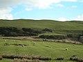 A Few Sheep - geograph.org.uk - 354839.jpg