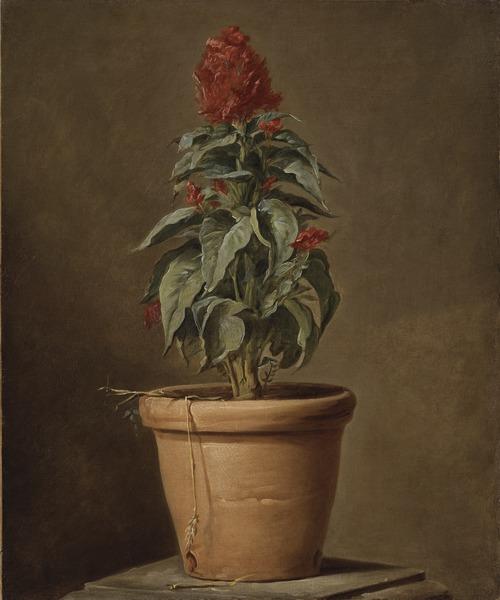 A Potted Plant (Henri Horace Roland de la Porte)