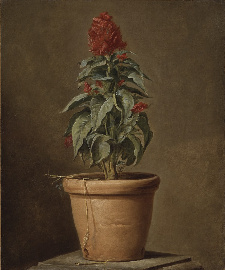 A Potted Plant