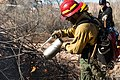 A firefighter uses a drip torch to light a vegetation pile in upper Courthouse Wash. These piles are accumulations of plant (2dedbf94-7ea6-4bb0-836d-44a467d88e0f).jpg