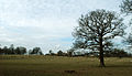 A view towards Grimsthorpe Castle, Lincolnshire, England 03.JPG