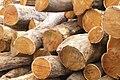 Acacia heterophylla Logs for cabinetmaking.JPG