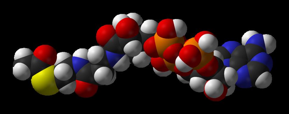 Acetyl-CoA-3D-vdW