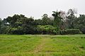 Acharya Jagadish Chandra Bose Indian Botanic Garden - Howrah 2011-02-20 1545.JPG