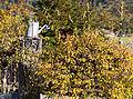 Achenkirch - Urlaub 2013 - Dinge - Gießkanne 001.jpg