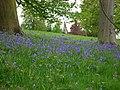 Across the bluebells - geograph.org.uk - 1295930.jpg