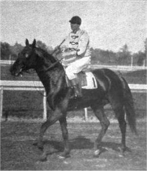 Africander (horse) - Circa 1904