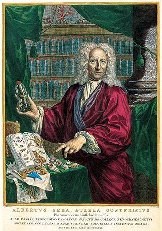 Albertus Seba - Albertus Seba showing a lizard in a bottle